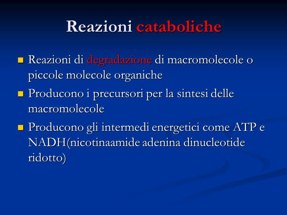 Reazioni cataboliche Reazioni di degradazione di macromolecole o piccole molecole organiche.