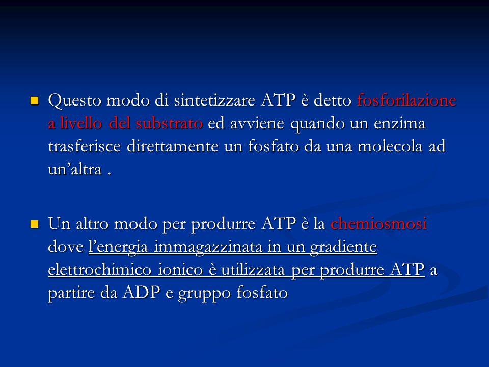 Questo modo di sintetizzare ATP è detto fosforilazione a livello del substrato ed avviene quando un enzima trasferisce direttamente un fosfato da una molecola ad un'altra .