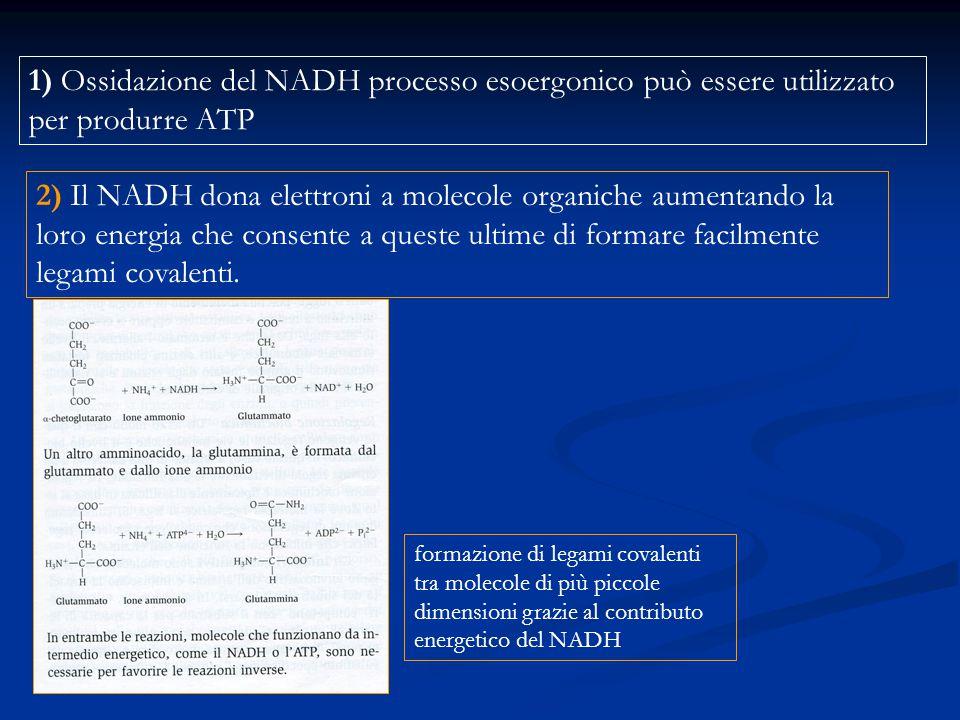 1) Ossidazione del NADH processo esoergonico può essere utilizzato per produrre ATP
