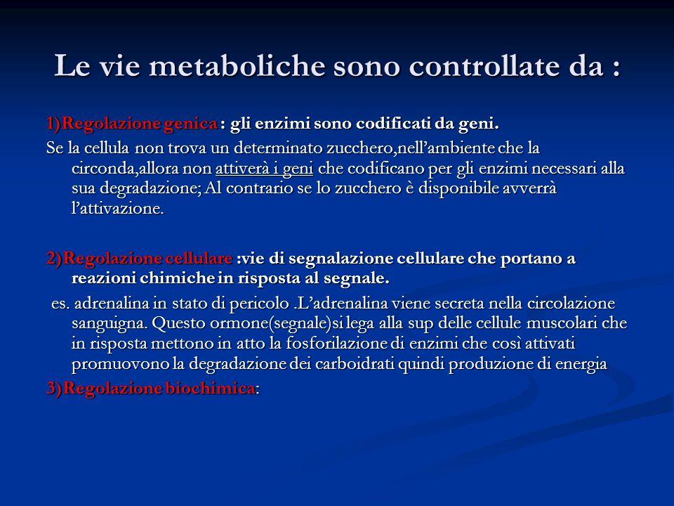 Le vie metaboliche sono controllate da :