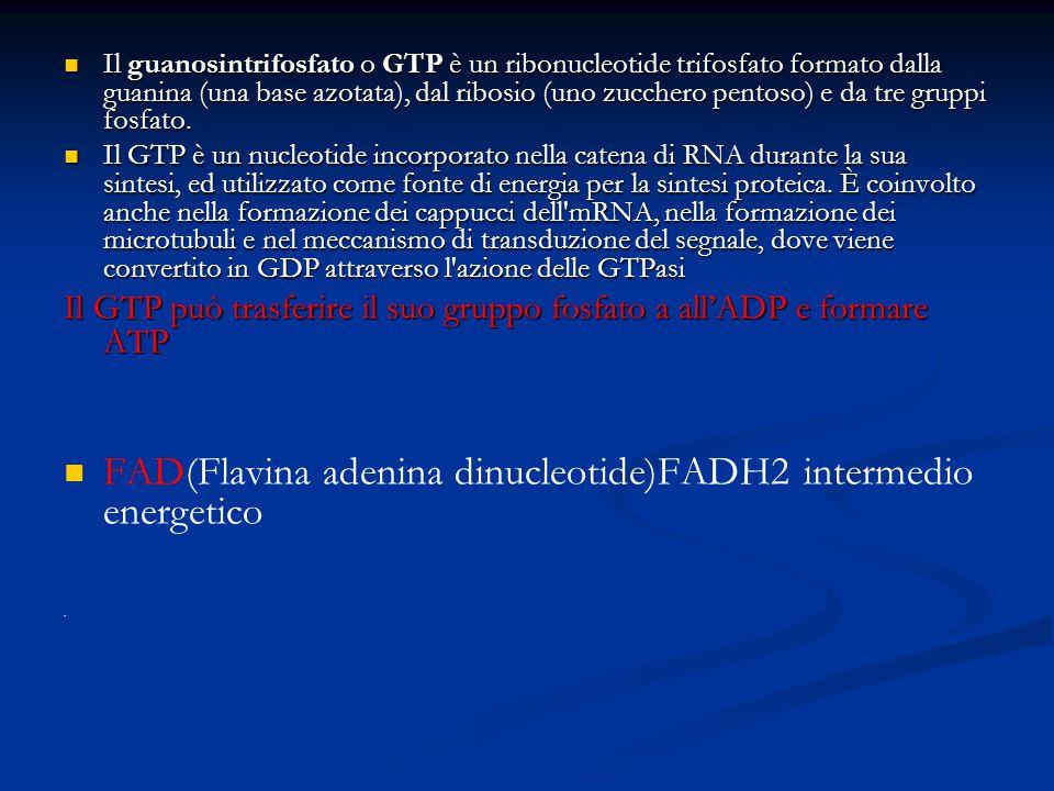 FAD(Flavina adenina dinucleotide)FADH2 intermedio energetico