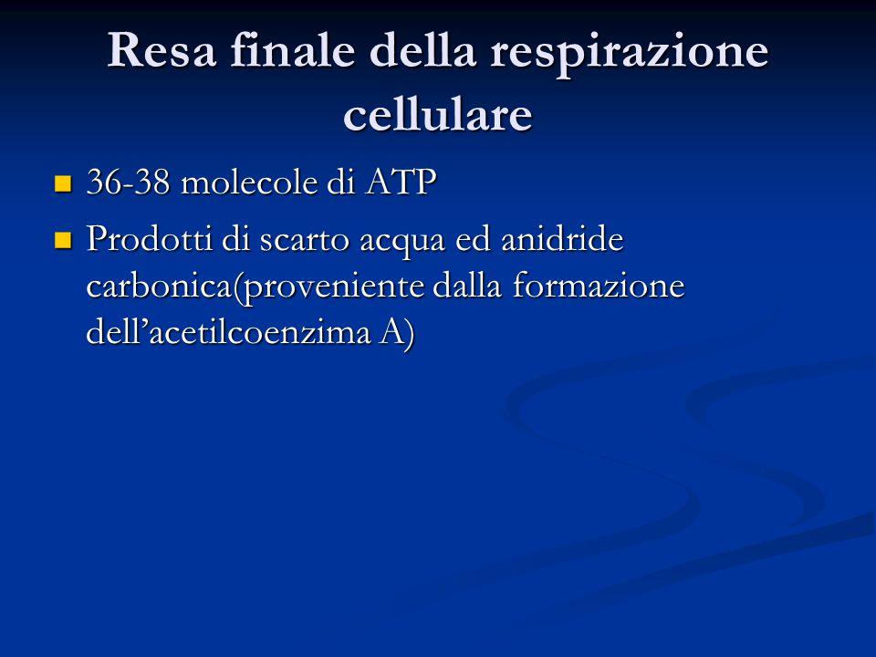 Resa finale della respirazione cellulare