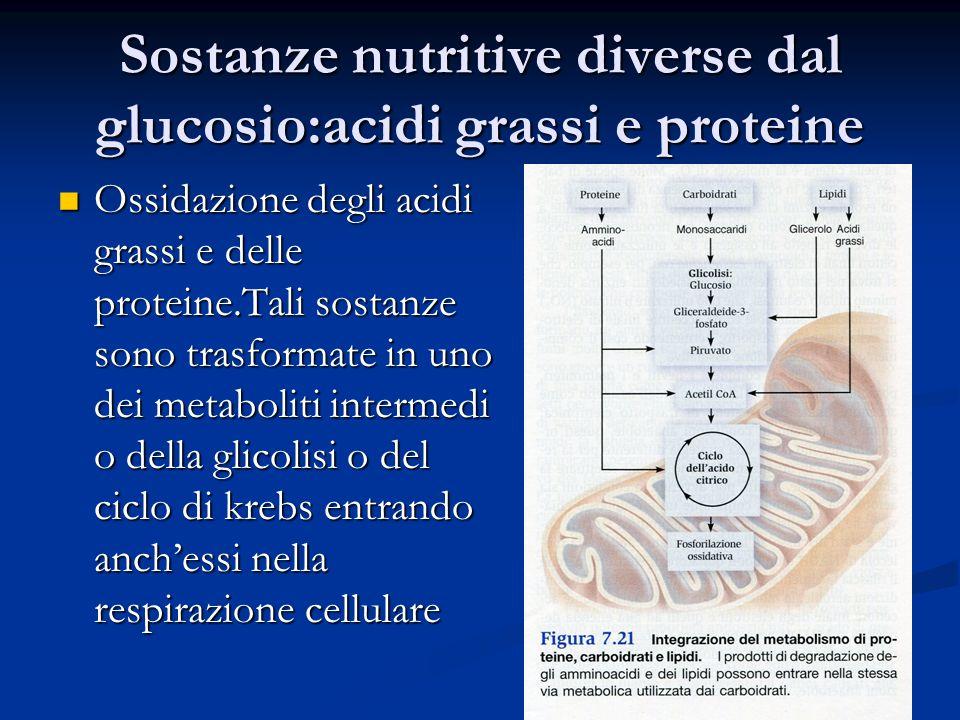 Sostanze nutritive diverse dal glucosio:acidi grassi e proteine