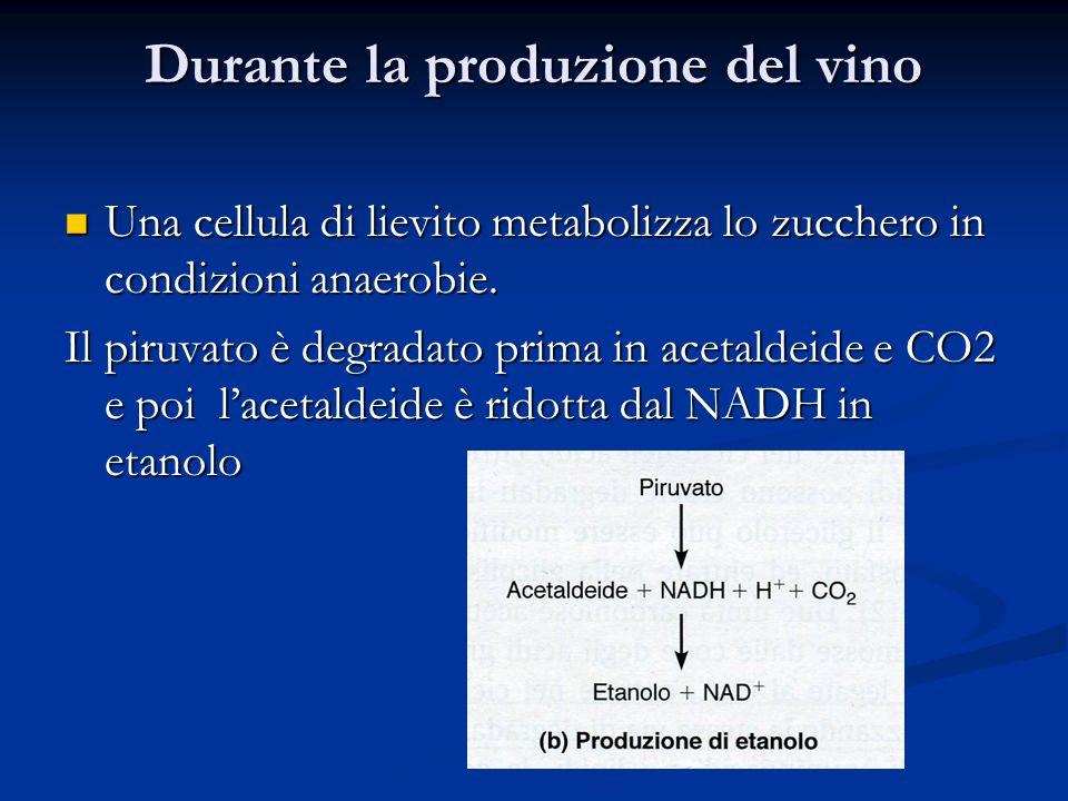Durante la produzione del vino