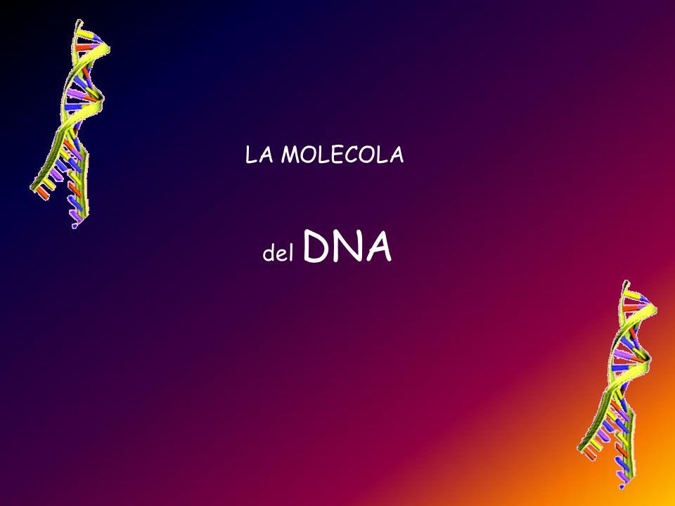 LA MOLECOLA del DNA