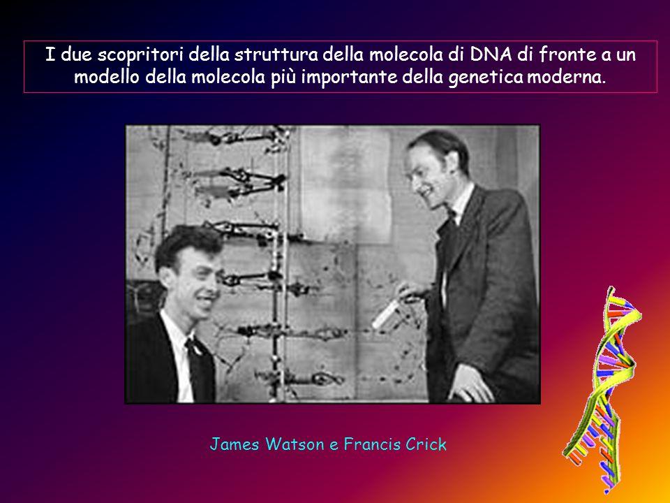 James Watson e Francis Crick