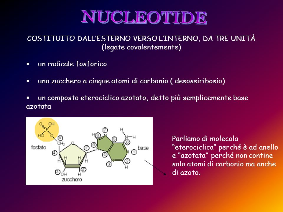 NUCLEOTIDE COSTITUITO DALL'ESTERNO VERSO L'INTERNO, DA TRE UNITÀ (legate covalentemente) un radicale fosforico.