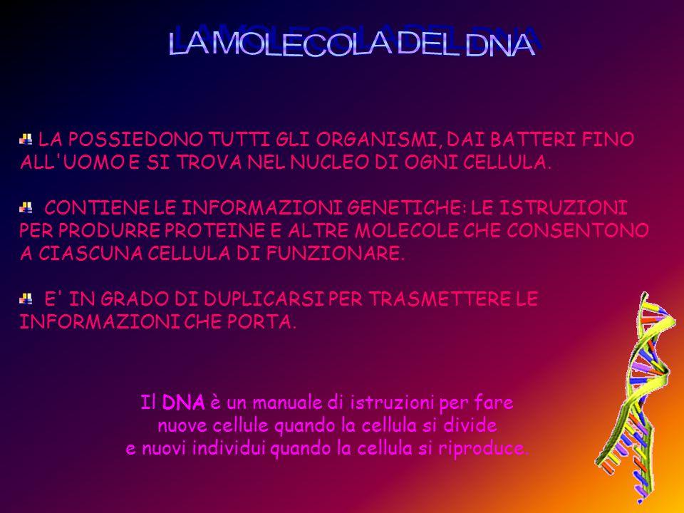 LA MOLECOLA DEL DNA LA POSSIEDONO TUTTI GLI ORGANISMI, DAI BATTERI FINO ALL UOMO E SI TROVA NEL NUCLEO DI OGNI CELLULA.