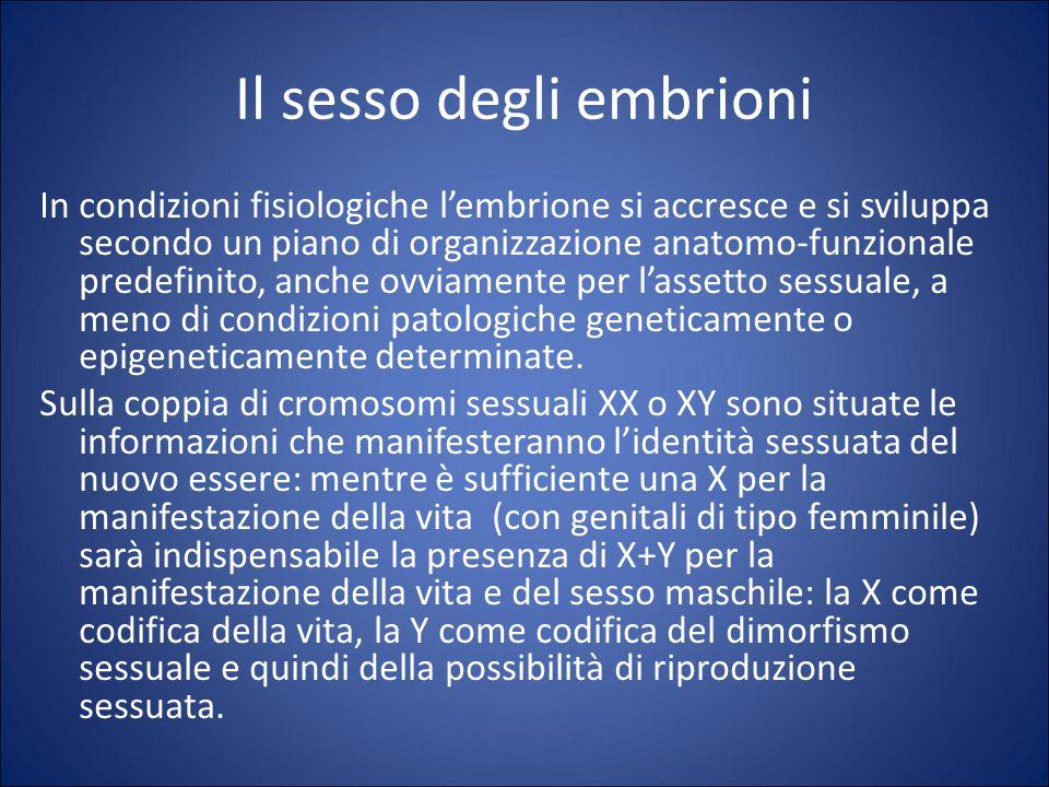 Il sesso degli embrioni