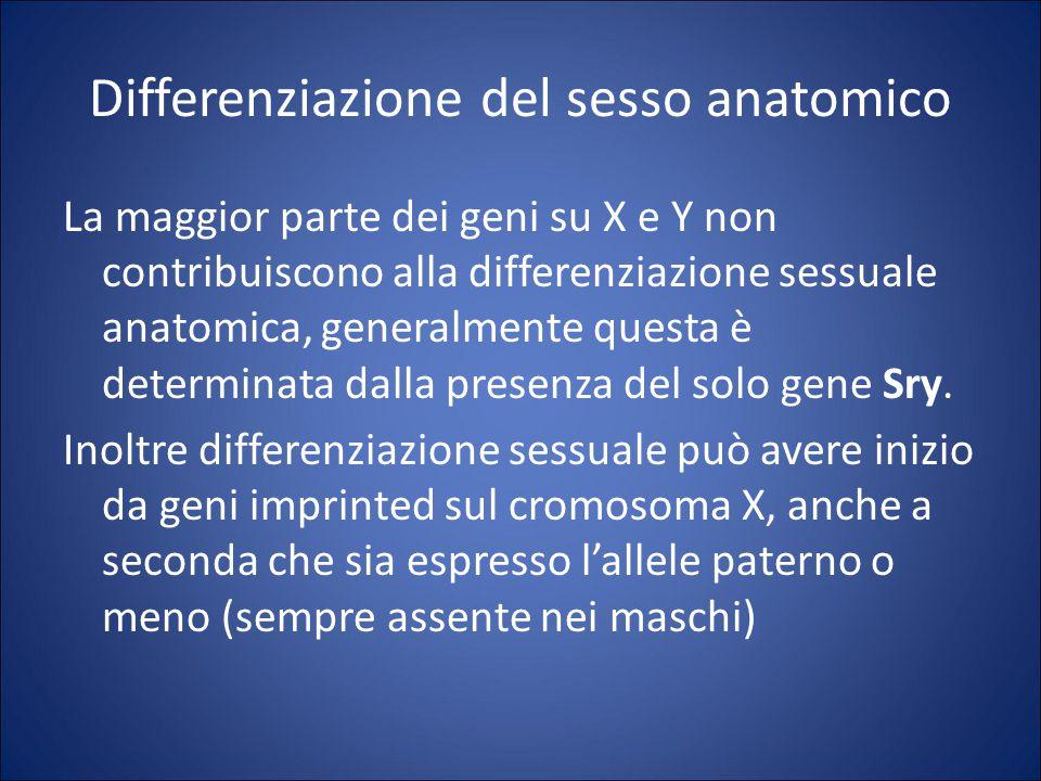 Differenziazione del sesso anatomico