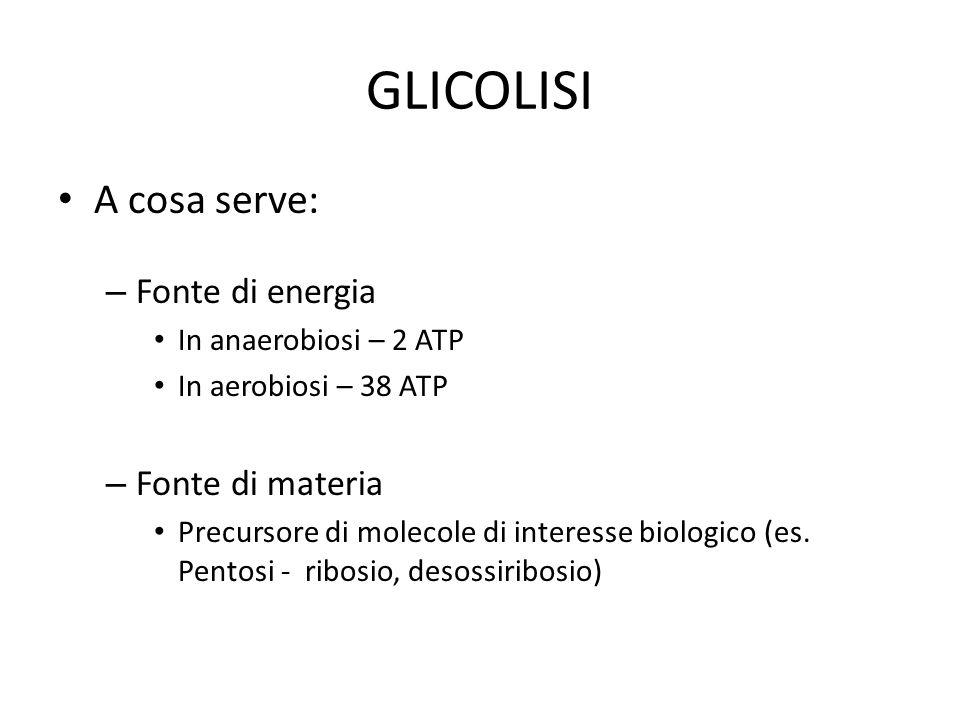 GLICOLISI A cosa serve: Fonte di energia Fonte di materia