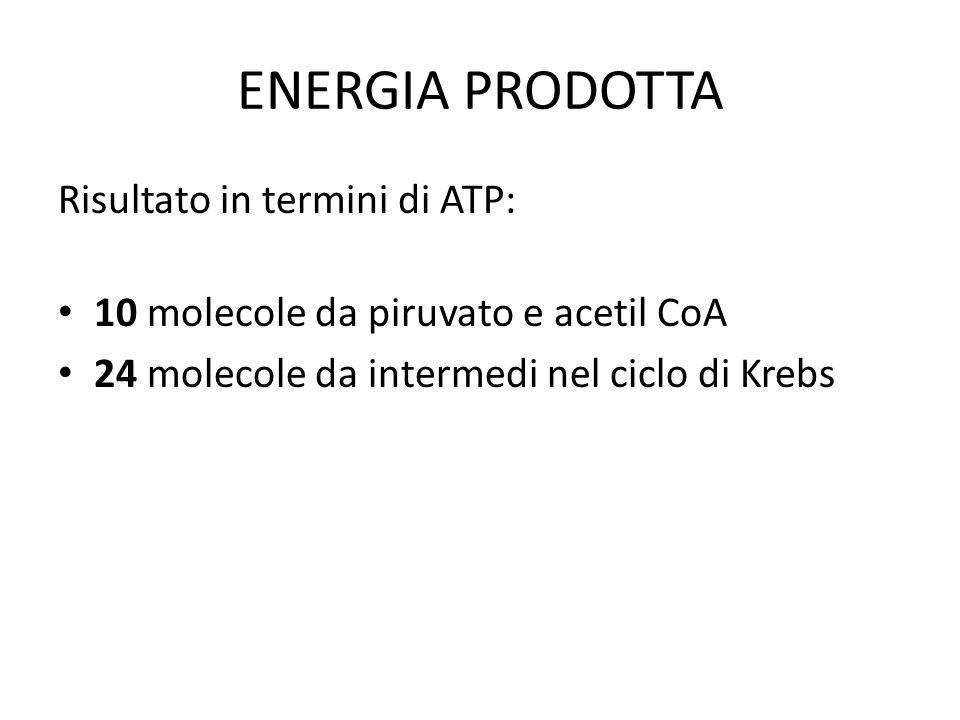 ENERGIA PRODOTTA Risultato in termini di ATP: