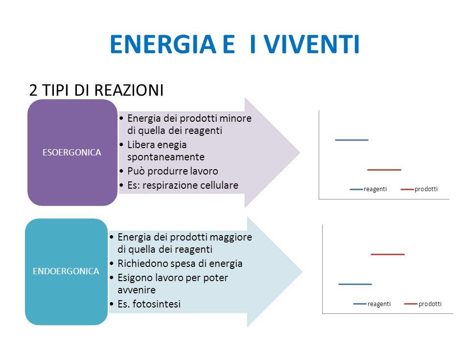 ENERGIA E I VIVENTI 2 TIPI DI REAZIONI