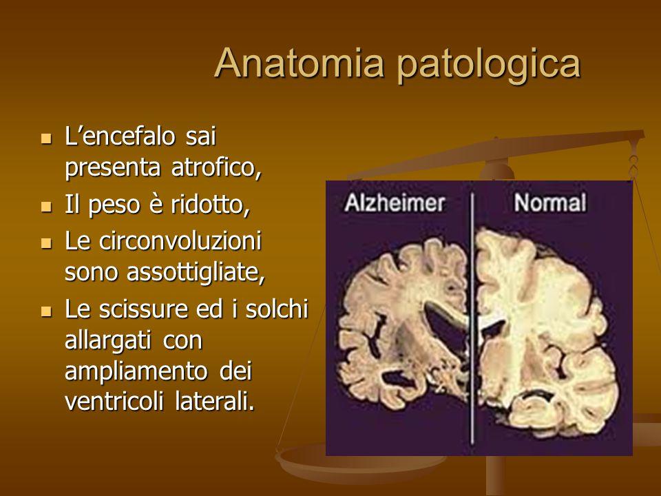 Anatomia patologica L'encefalo sai presenta atrofico,