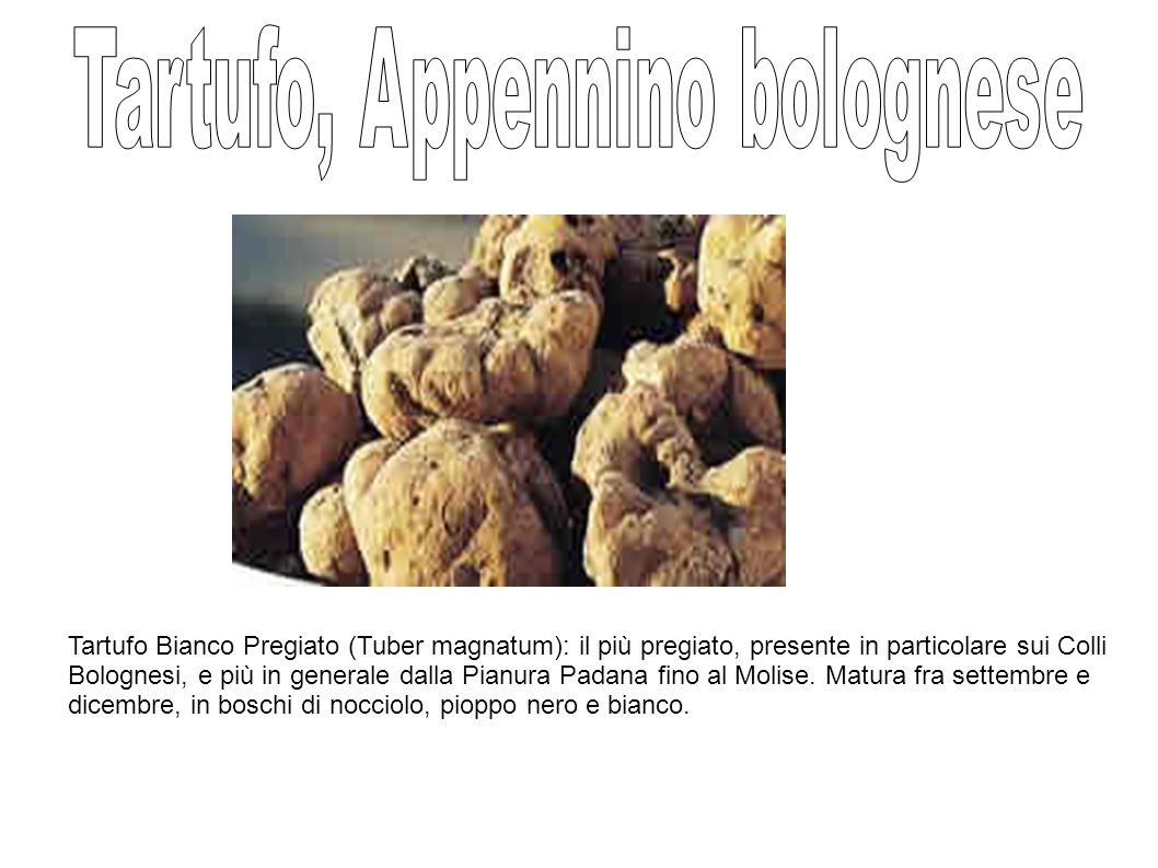 Tartufo, Appennino bolognese
