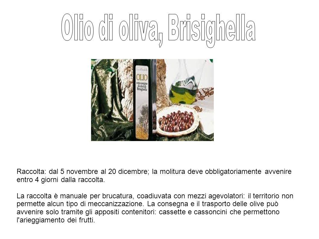 Olio di oliva, Brisighella