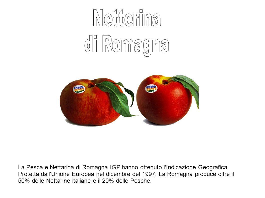 Netterina di Romagna.