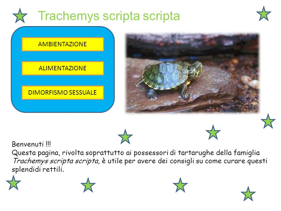 Trachemys scripta scripta