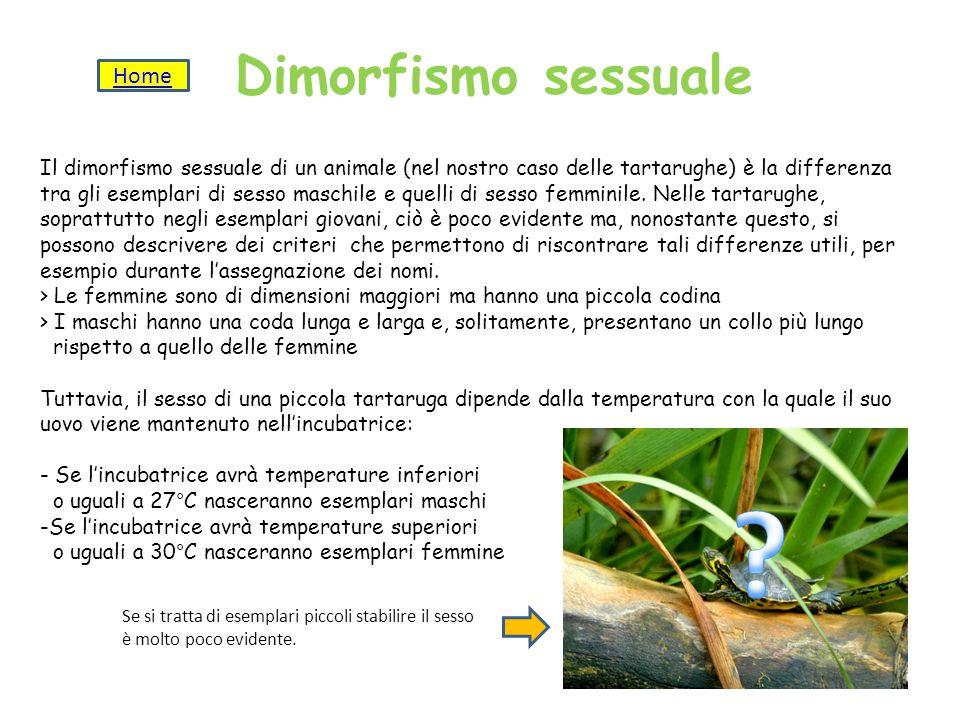 Dimorfismo sessuale Home