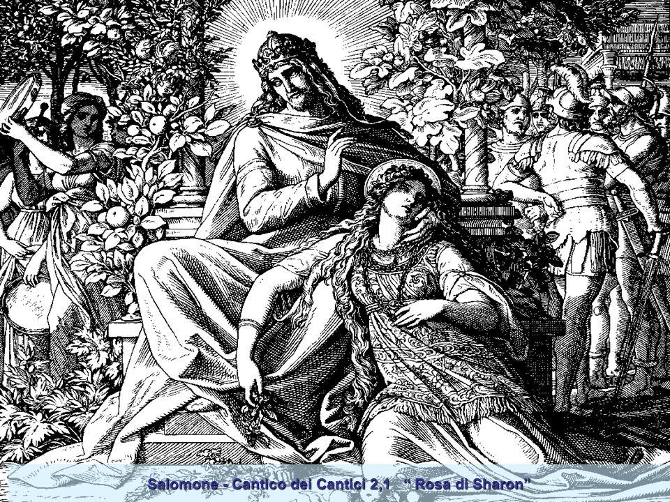 Salomone - Cantico dei Cantici 2,1 Rosa di Sharon