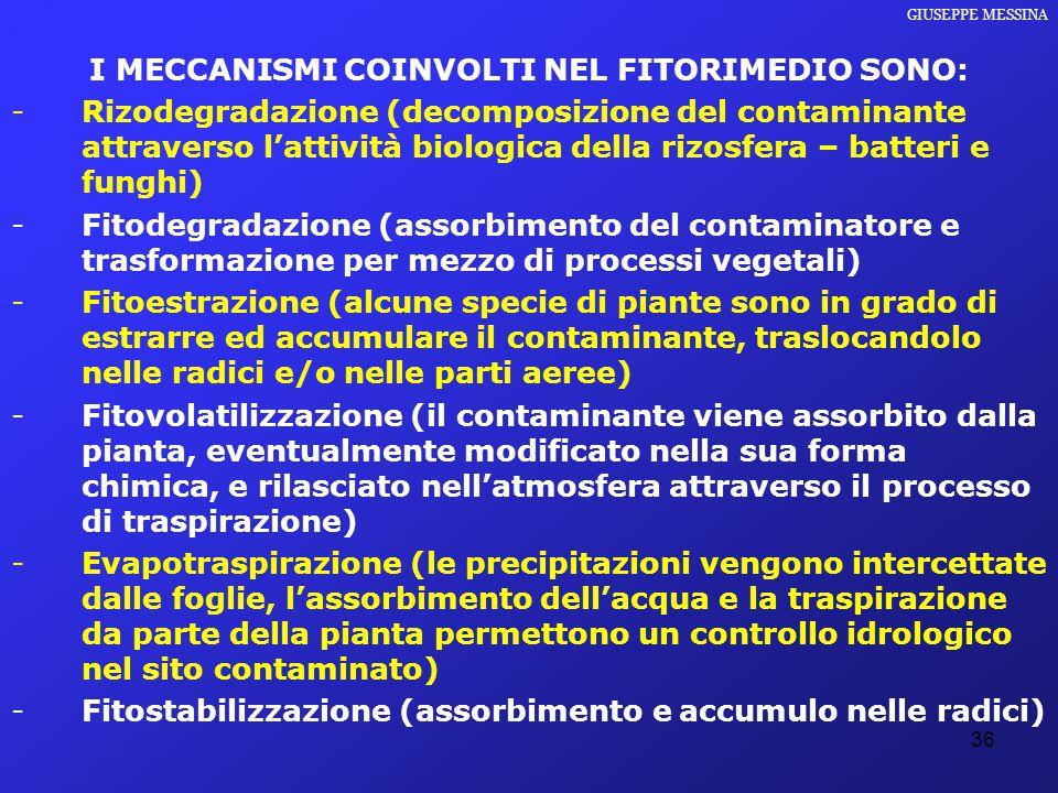 I MECCANISMI COINVOLTI NEL FITORIMEDIO SONO: