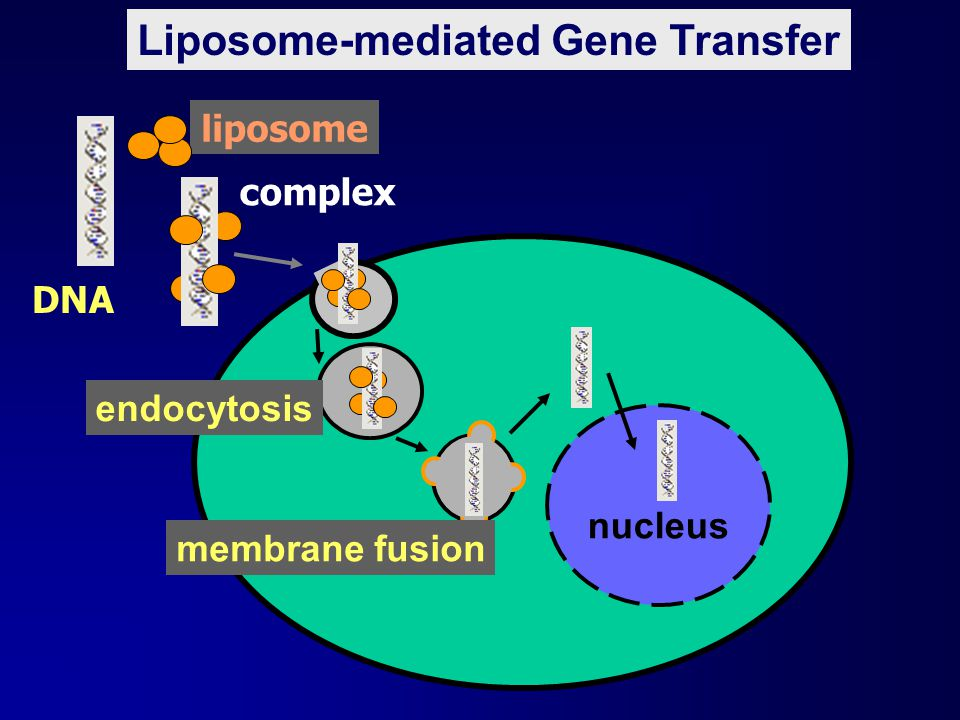 Liposome-mediated Gene Transfer