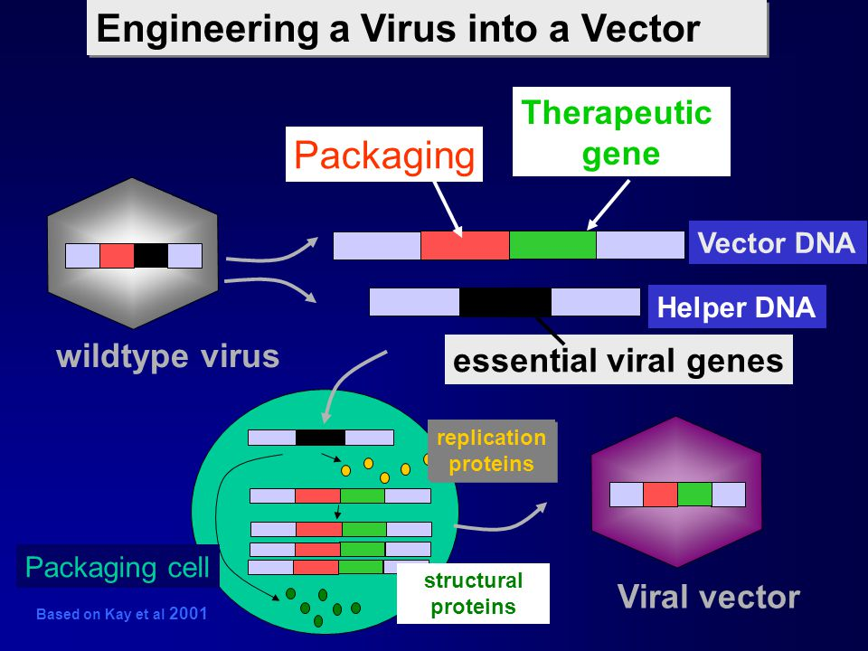 Engineering a Virus into a Vector