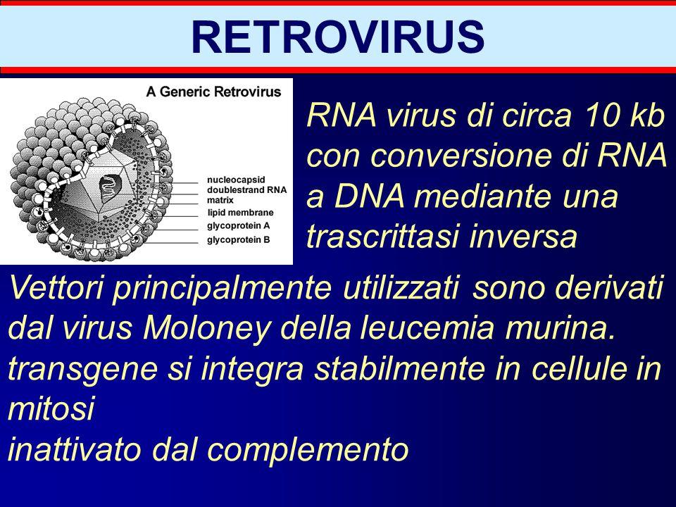 RETROVIRUS RNA virus di circa 10 kb con conversione di RNA a DNA mediante una trascrittasi inversa.