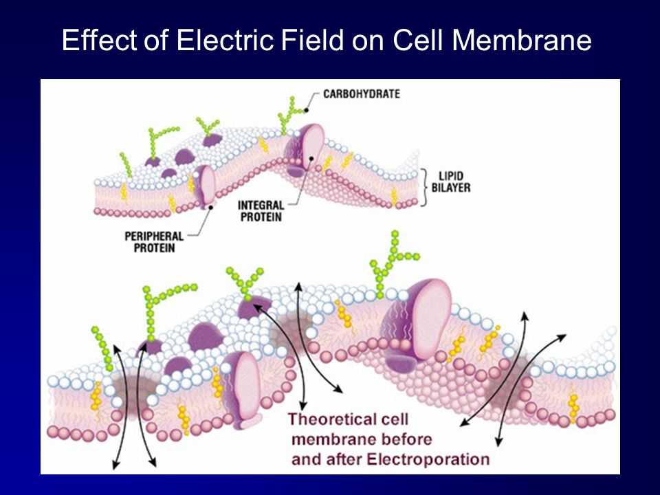 Effect of Electric Field on Cell Membrane