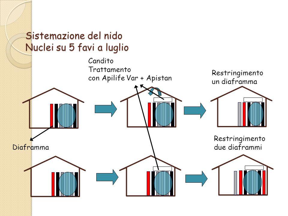 Sistemazione del nido Nuclei su 5 favi a luglio