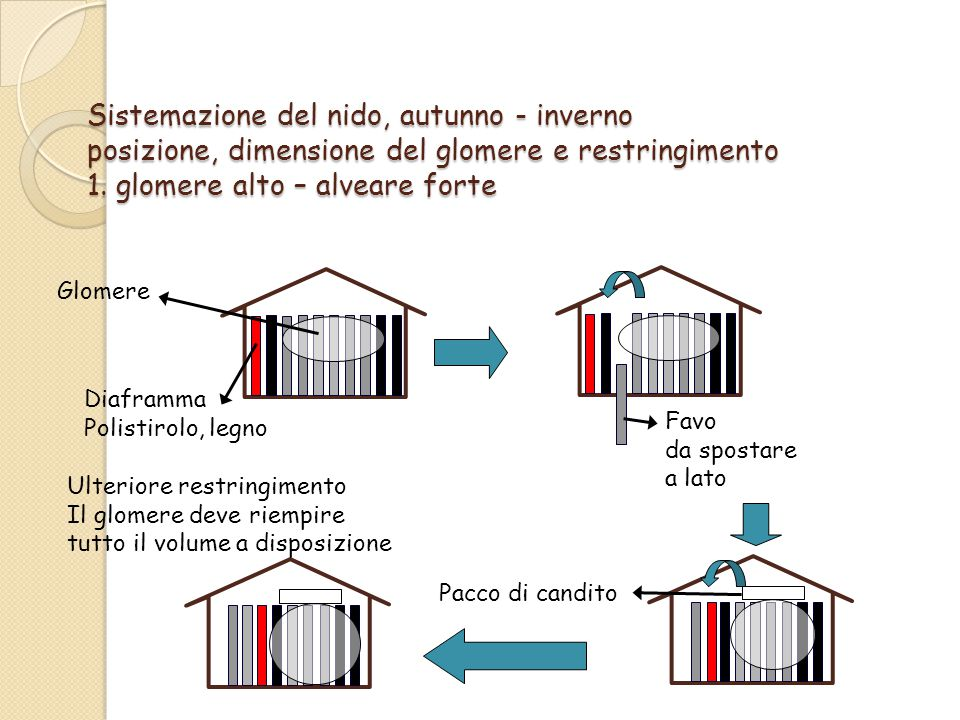Sistemazione del nido, autunno - inverno posizione, dimensione del glomere e restringimento 1. glomere alto – alveare forte