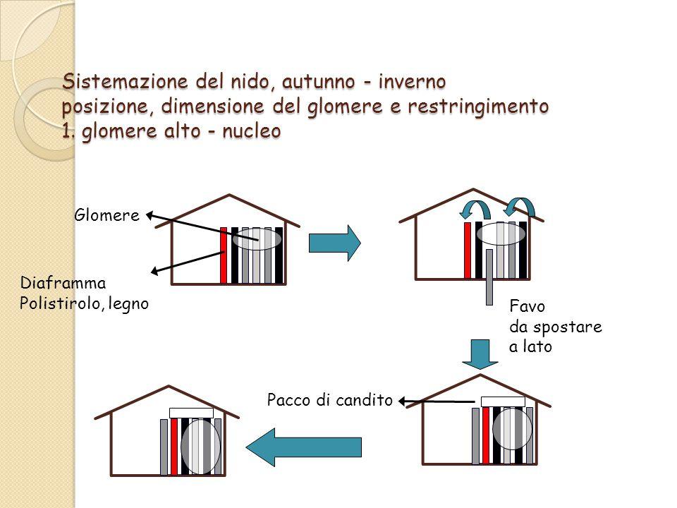 Sistemazione del nido, autunno - inverno posizione, dimensione del glomere e restringimento 1. glomere alto - nucleo