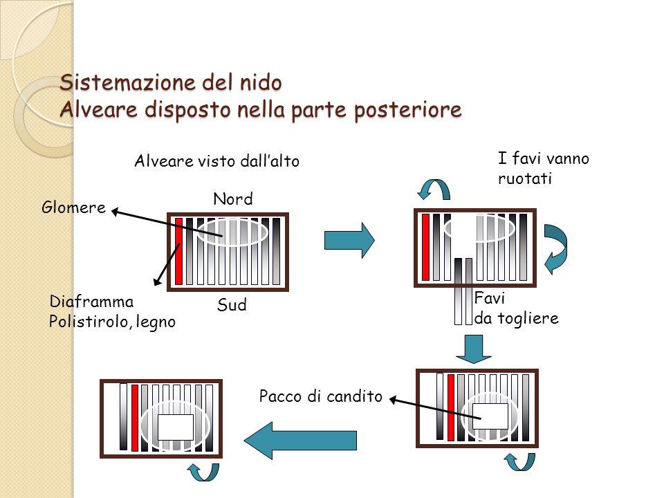 Sistemazione del nido Alveare disposto nella parte posteriore