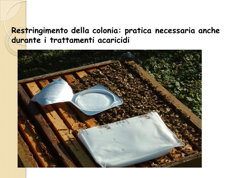 Restringimento della colonia: pratica necessaria anche durante i trattamenti acaricidi
