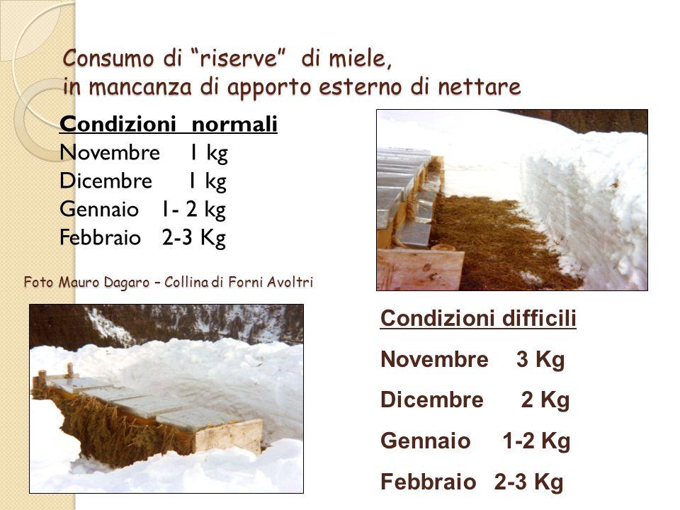 gori Consumo di riserve di miele, in mancanza di apporto esterno di nettare. Condizioni normali.