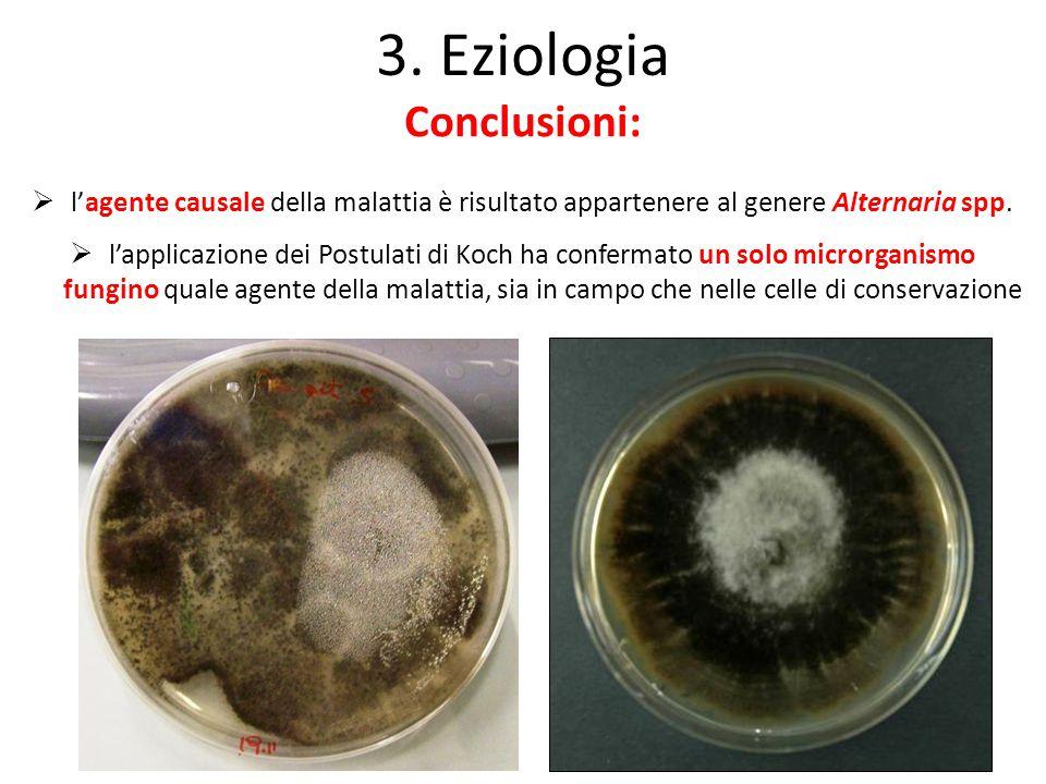 3. Eziologia Conclusioni: