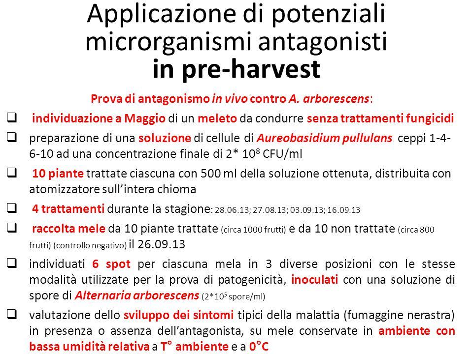 Applicazione di potenziali microrganismi antagonisti in pre-harvest