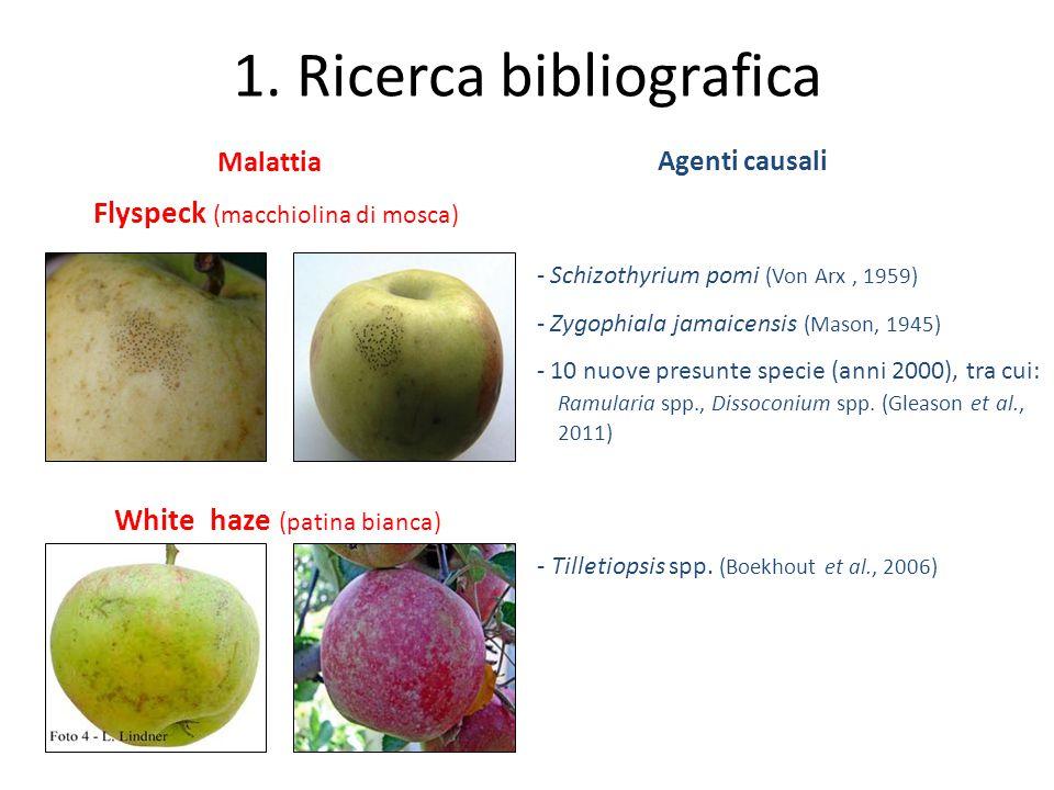 1. Ricerca bibliografica