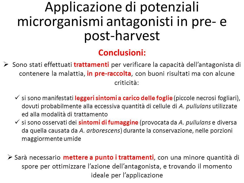 Applicazione di potenziali microrganismi antagonisti in pre- e post-harvest