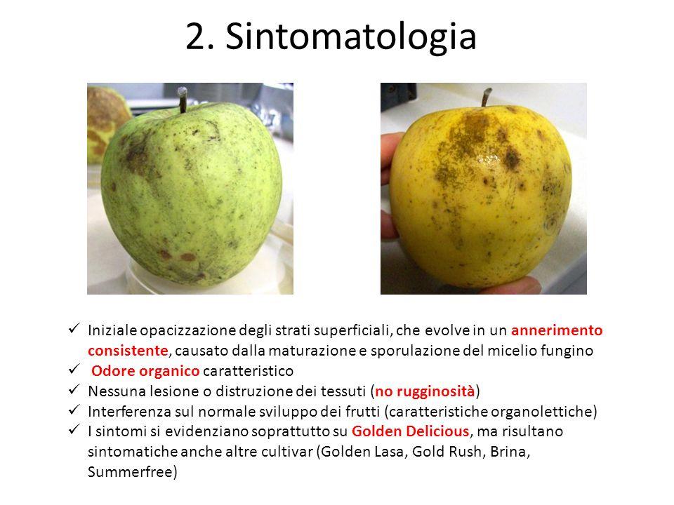 2. Sintomatologia
