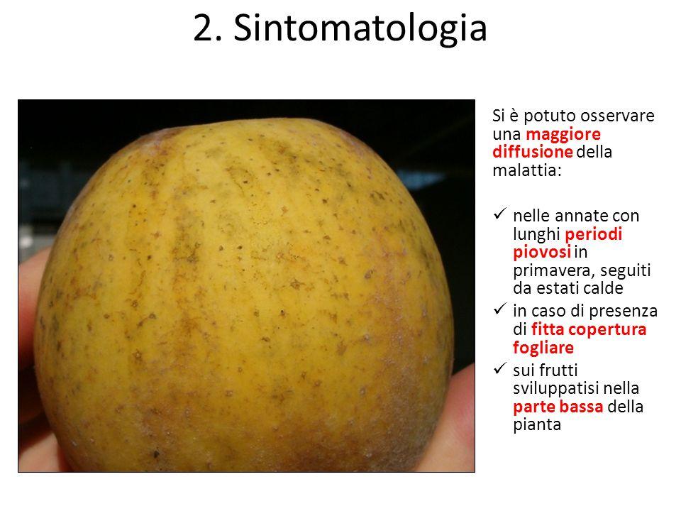 2. Sintomatologia Si è potuto osservare una maggiore diffusione della malattia: