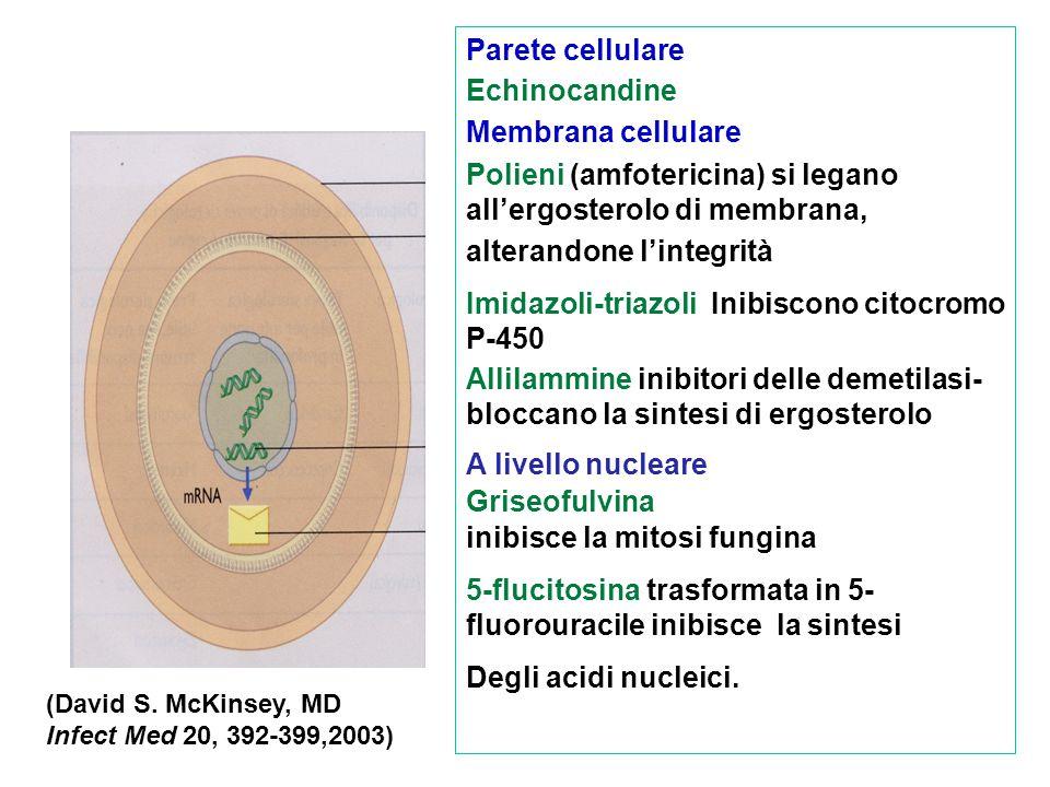 Polieni (amfotericina) si legano all'ergosterolo di membrana,