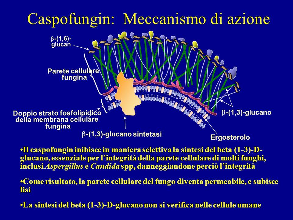 Caspofungin: Meccanismo di azione
