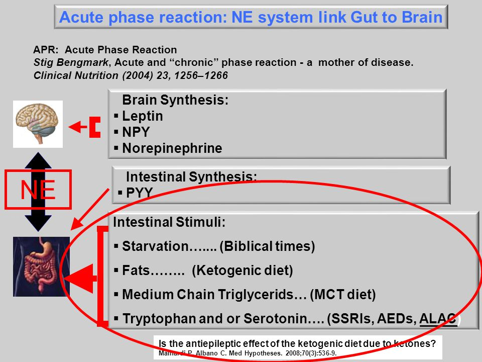 NE Acute phase reaction: NE system link Gut to Brain Brain Synthesis: