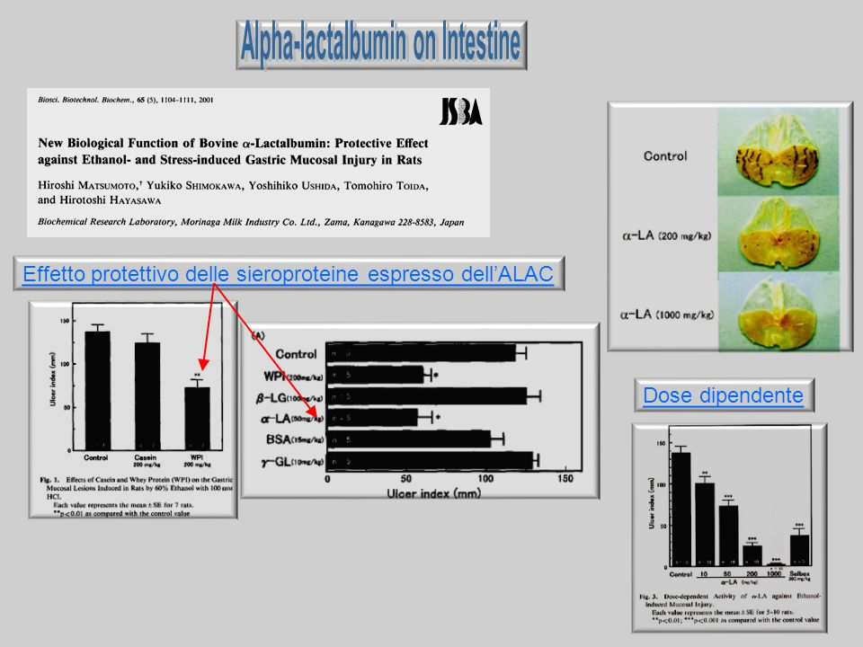Alpha-lactalbumin on Intestine