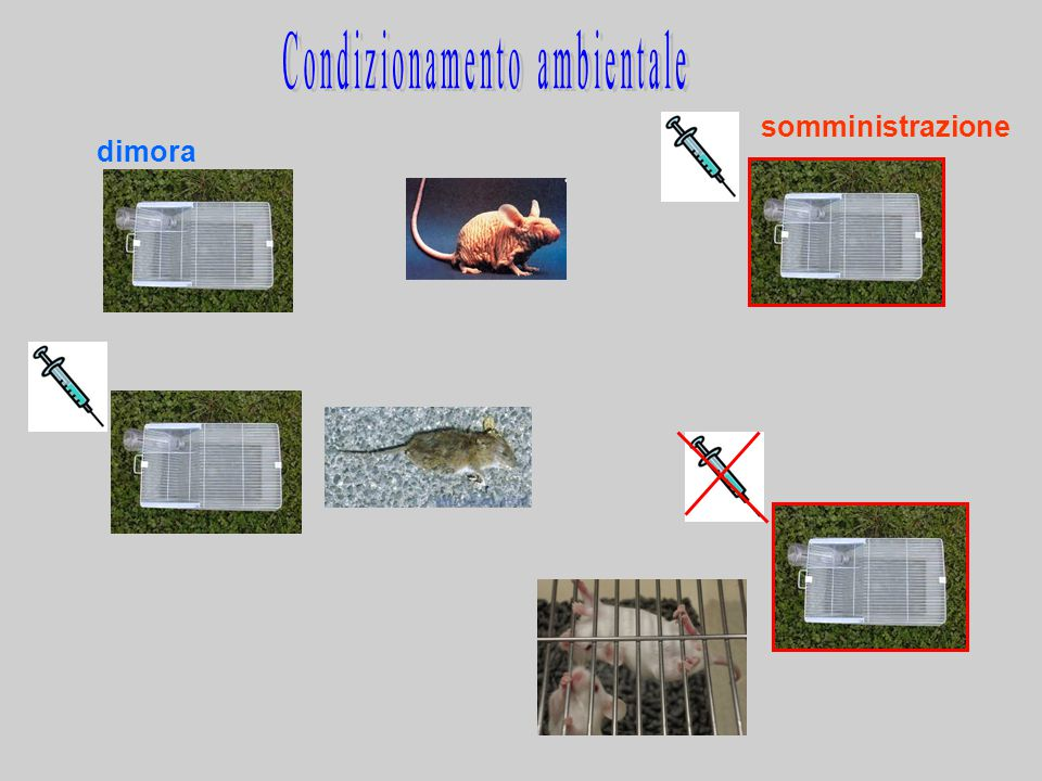 Condizionamento ambientale