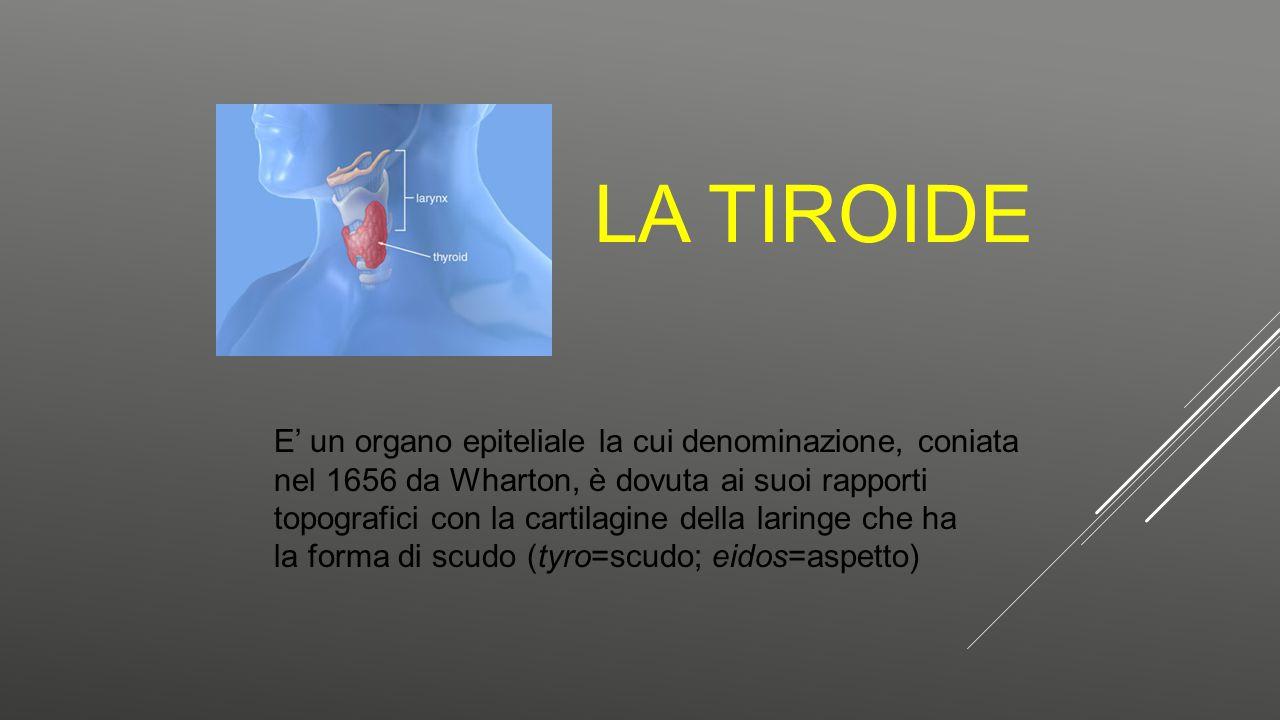 La Tiroide E' un organo epiteliale la cui denominazione, coniata