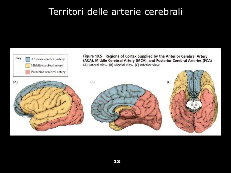 Territori delle arterie cerebrali