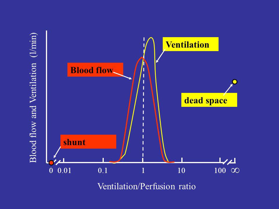  Ventilation Blood flow and Ventilation (l/min) Blood flow dead space