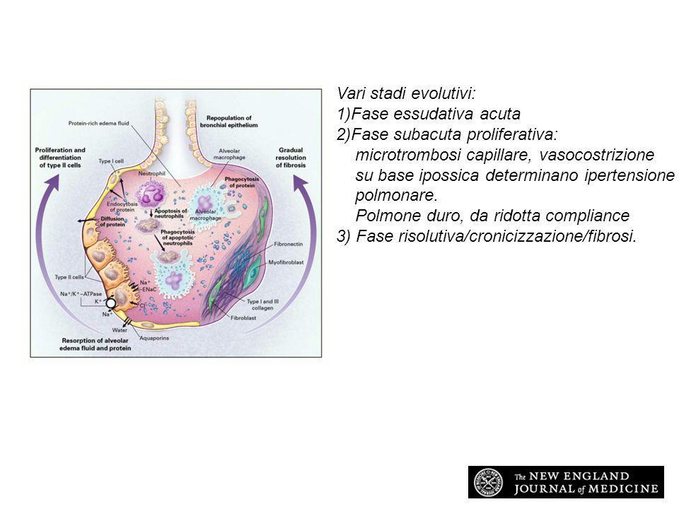 1)Fase essudativa acuta 2)Fase subacuta proliferativa: